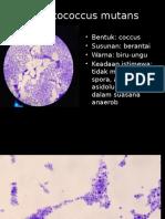 Identifikasi Bakteri Presentasi MIKRO
