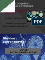 Clase Bacillariophyceae (Diatomeas)