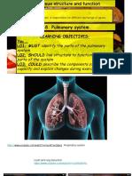 Lesson18 Pulmonary System