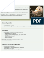 Invertebrados. Rayuela