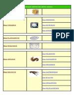Invertebrados Muy Completo