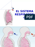 sistemarespiratorio-141001080036-phpapp01