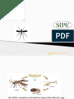 Mosquito | mosquito control bangalore | mosquito control