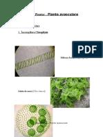 Regnul Plantae - Plante Avasculare