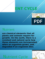 Nutrient Cycle,,Apple