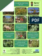 Plants of ICA (6) 2011 Update