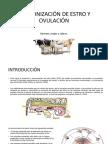 Sincronización de Estro y Ovulación Diana Aviles