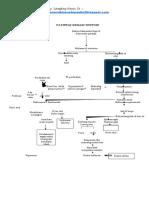 (338879315) 98627191-Pathway-Demam-Thypoid.docx