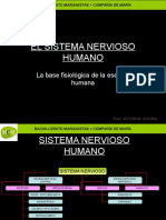 Sistema Nervioso Mcm