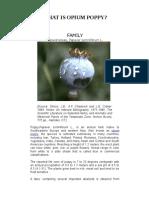 What is Opium Poppy