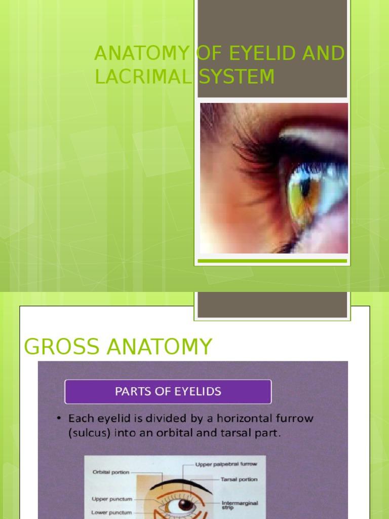 Eyelid Anatomy | Animal Anatomy | Organ (Anatomy)