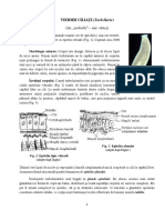 Plathelminthes Cl Turbellaria (1)