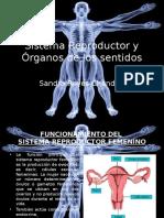 Sandra Reyes Control 7