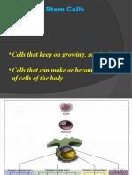 3 Stem Cells