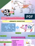 Aparato digestivo bovinos