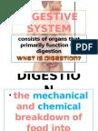 Digestive System Fin