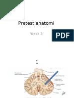 anatomi 1