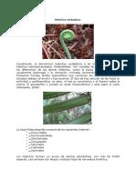 Polipodiopsida-HELECHOS-VERDADEROS