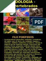 zoologia-invertebrados