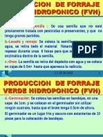 HIDROPONIA 2A