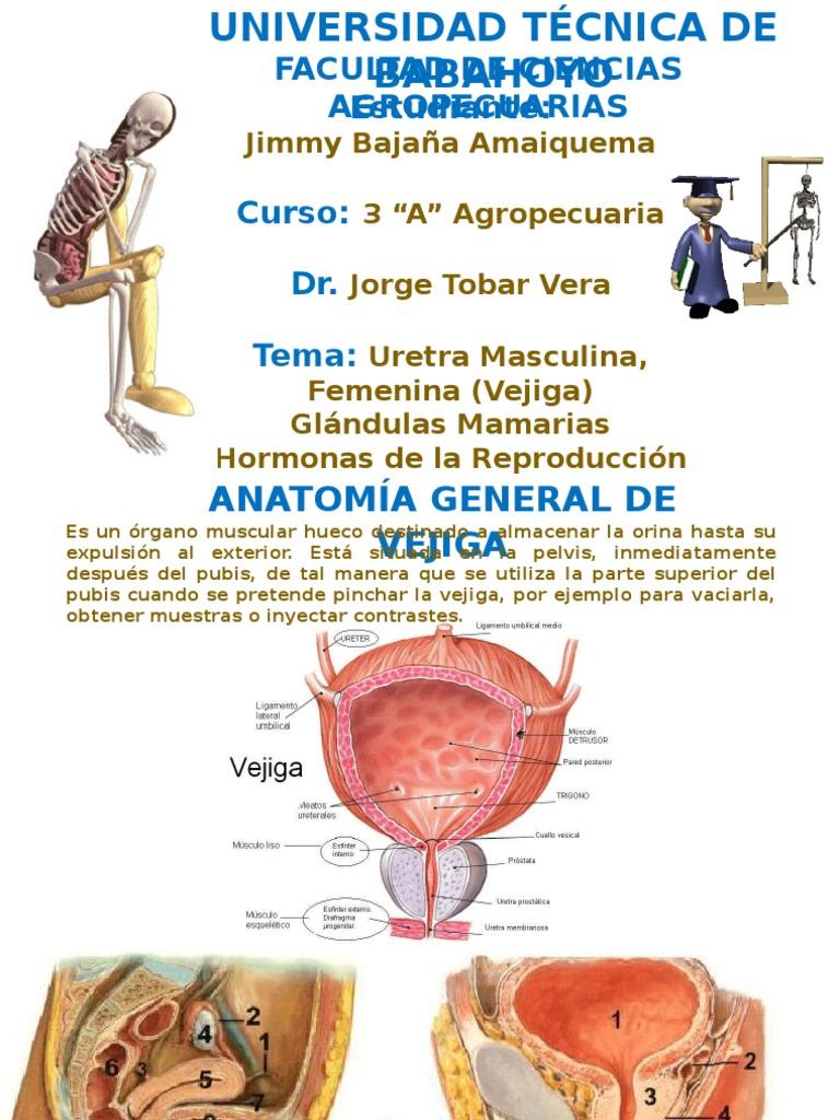 Anatomia 3ero a Agropecuaria