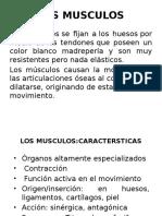 Los Musculos (2)