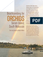Beachcombing+for+Orchids