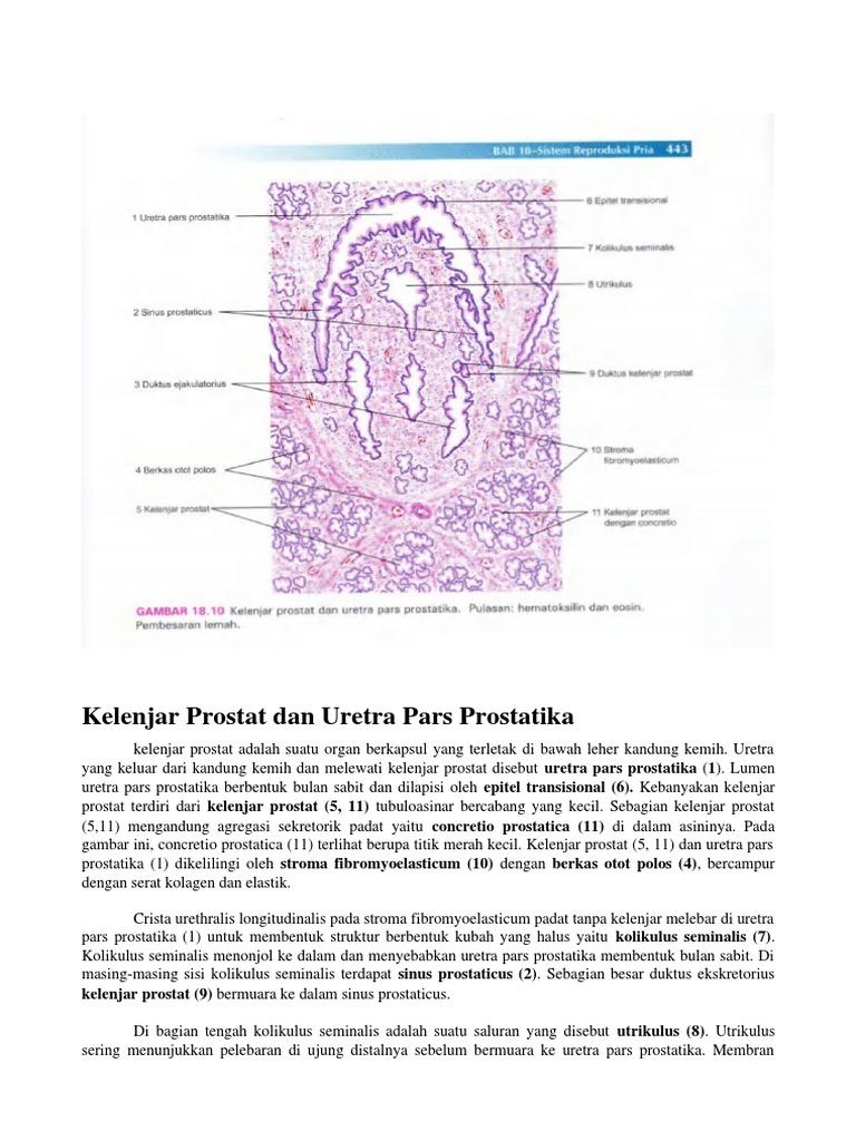 istologia michigan della prostata