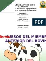 Anatomia Bovino