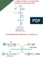 CicloAcidoCitrico II 2016