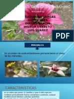 Botanica ...Malvaceas[1]