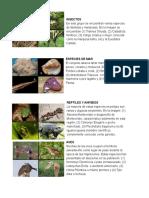 Ciencias - Animales En peligro de Extincion