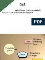 1Struktur DNA