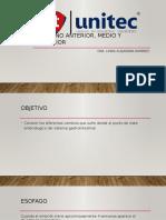 Intestino Anterior, Medio y Posterior(1)