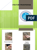 Catalogo Del Bosque Protector de Prosperina