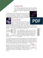 ADN (Ácido Desoxirribonucleico)