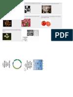 Linea Del Tiempo de La Biotecnonogia