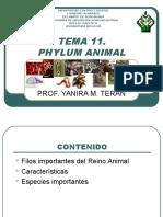 Tema 11 Phylum Animal