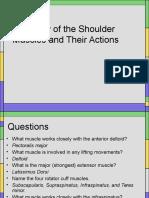 Shoulder 3