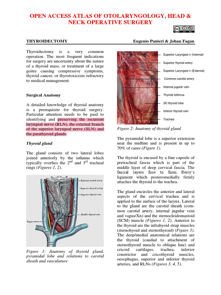 Thyroidectomy Vula Atlas Thyroid Common Carotid Artery