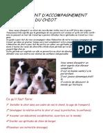 Accompagnemjjchent Du Chiot