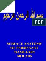 1-Maxillary Molars Future