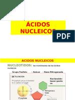 Biomolec 2 Acidos Nucleicos