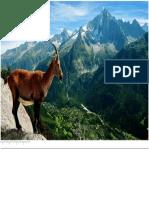 Mountain Goat.docx