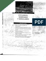 Ecologia - Estuarios Marismas Manglares