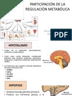 Participacion de La Regulacion Metabolica