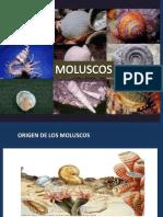 moluscos 2017