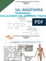 Seminario Anatomía