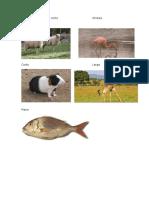 Animales Con Cuerpo RectoOndulo