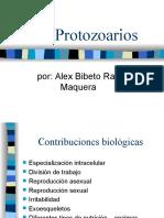 Protozoarios Ciliados .Alex Bibeto Ramos Maquera
